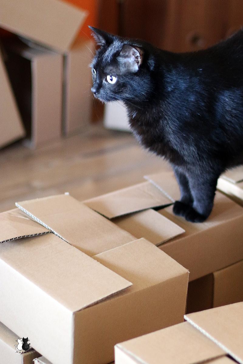 jak zszokować kota