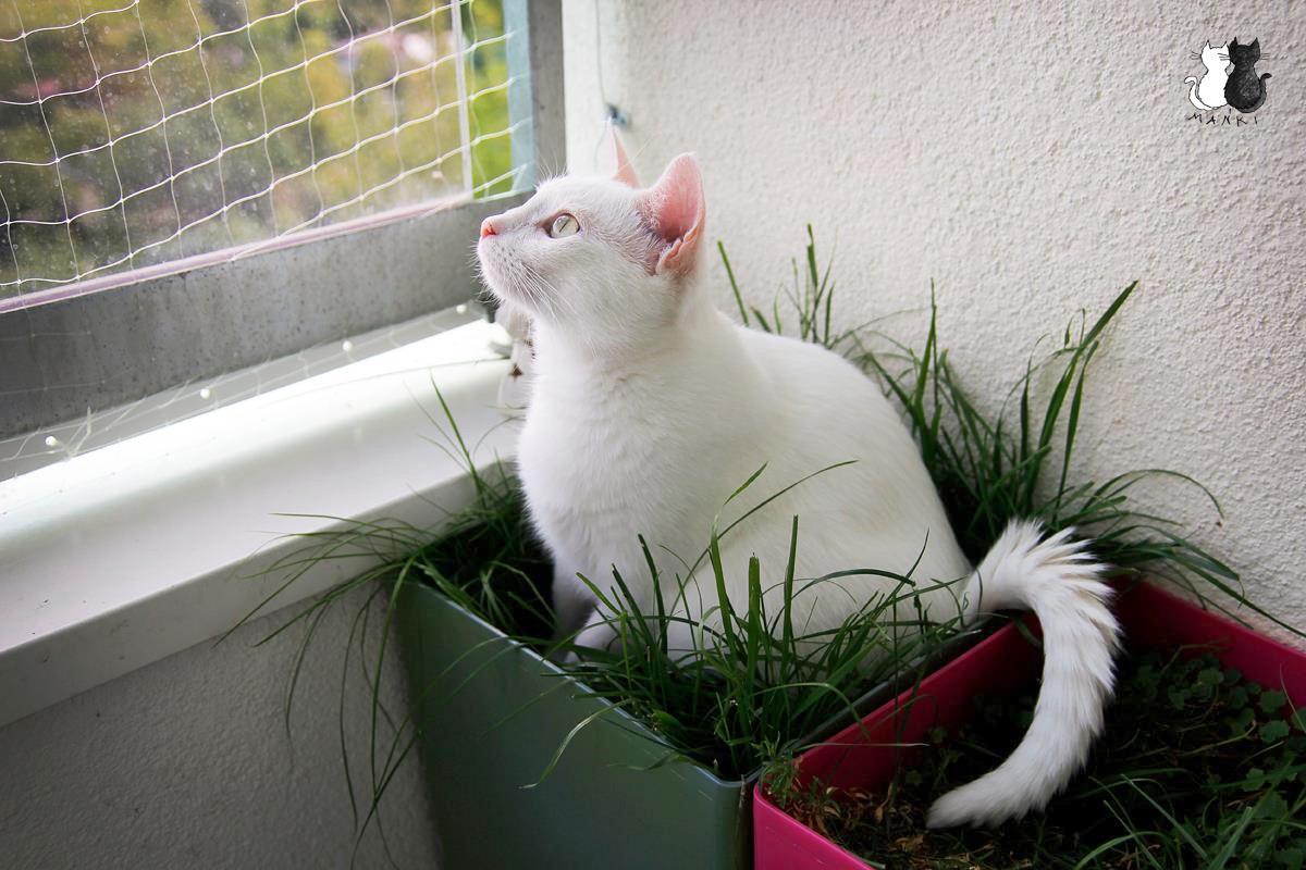 balkon dla kota
