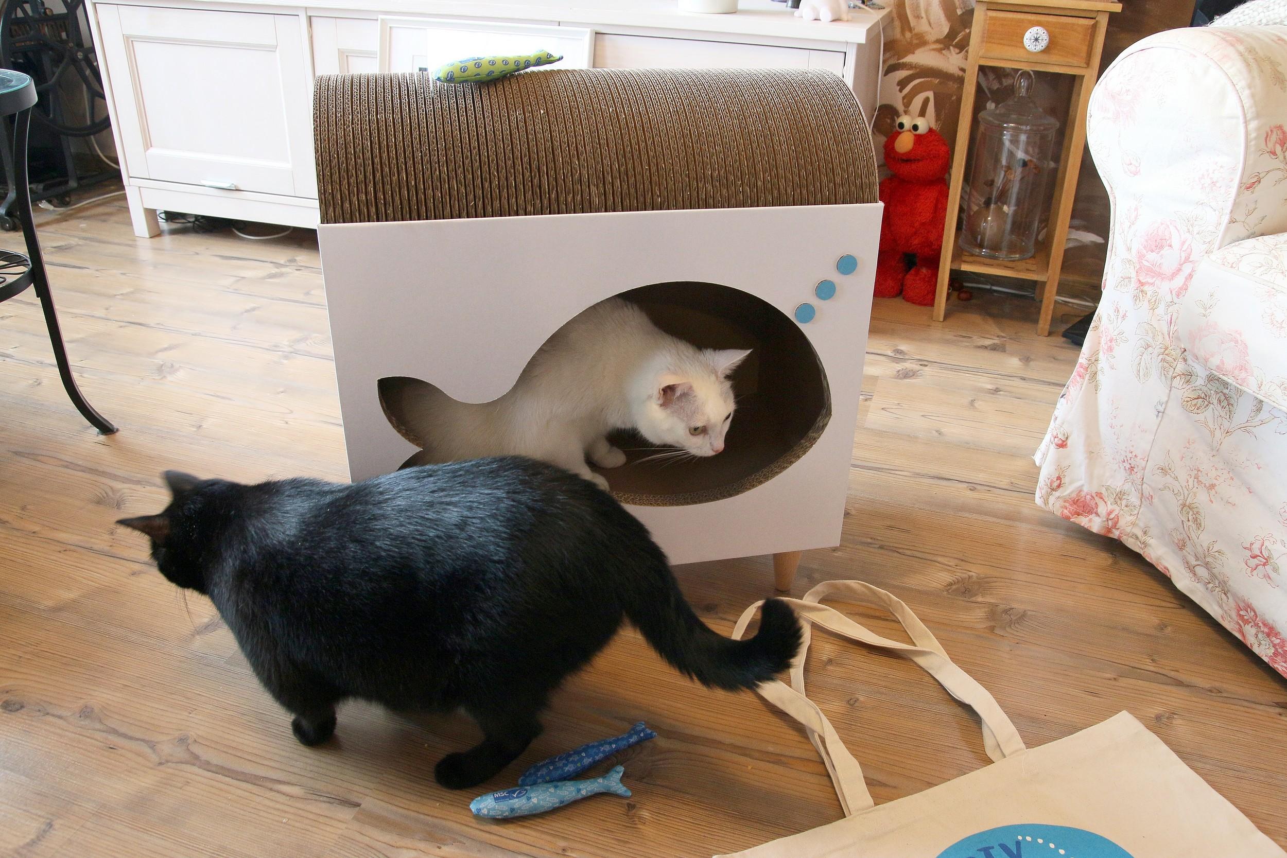 koty lubią szproty